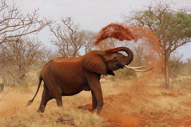 Slon okolo seba rozhadzuje prach.jpg